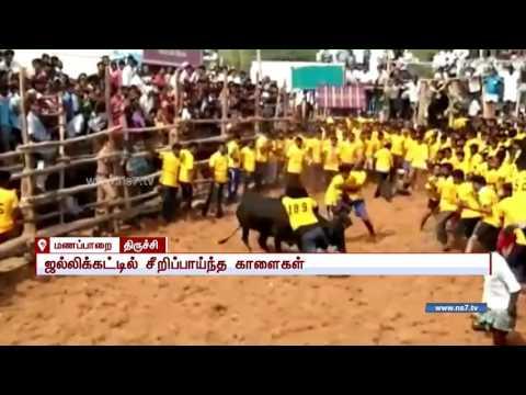 Jallikattu conducted in Manapparai, Trichy   News7 Tamil