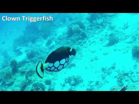 Diving trip to Maldives