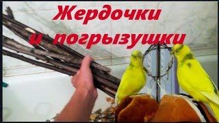 Как сделать жердочки и погрызушки своими руками для попугая. #Птицы Perch and pogruzochno.