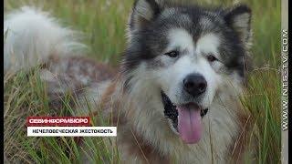 19.10.2018 В Севастополе продолжается поиск мужчины, зарезавшего собаку на глазах у хозяйки
