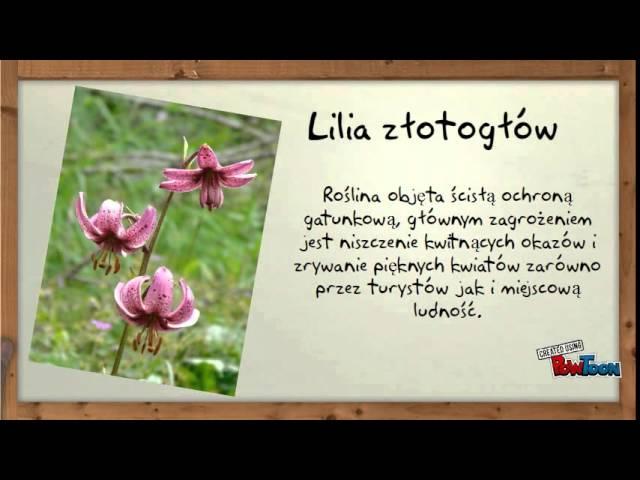 Rosliny Chronione W Polsce Official Youtube