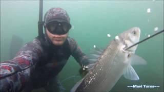 levrek avları Şişte Kalanlar spearfishing(Mavi Toros)