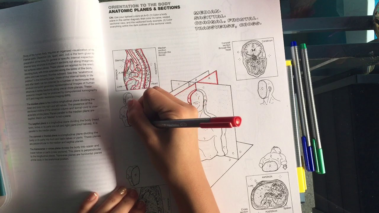 - Anatomy Coloring Book😶 - YouTube