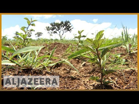 🇧🇷 Planting seeds in Brazil to solve water scarcity problem