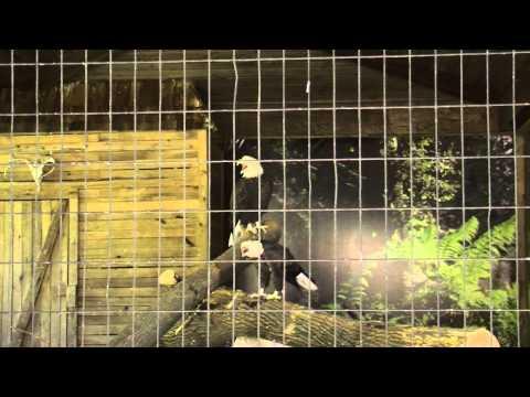 Blank Park Zoo music video