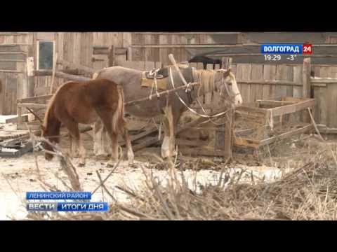 Волгоградские фермеры развивают КФХ с помощью государственной поддержки