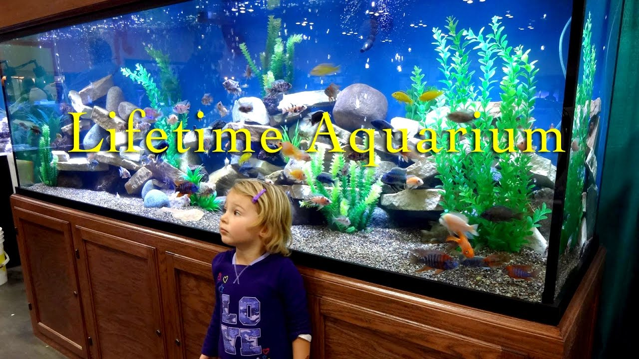 Lifetime Glass Aquariums