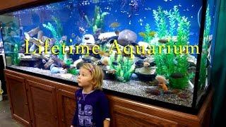 Lifetime Aquariums - Safe, Strong, Dependable & Beautiful