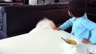 家族の注目がネコだと気に入らないんです.