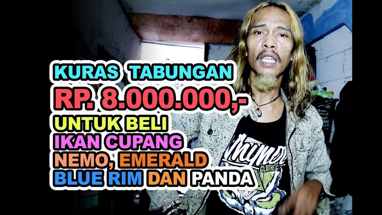 IKAN CUPANG NEMO THAILAND - YouTube
