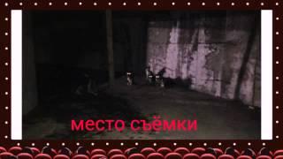 Собаки-актеры. Фильм о фильме. Рабочие моменты.