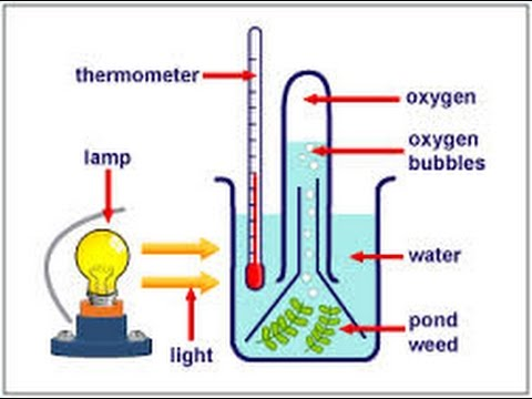 Diagram Of Nahco3 To Prove That Oxygen Is Produced During Photosynthesis