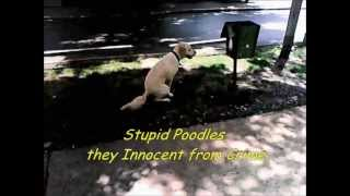 Poodles - Amnon Kabuly  (full Vers)
