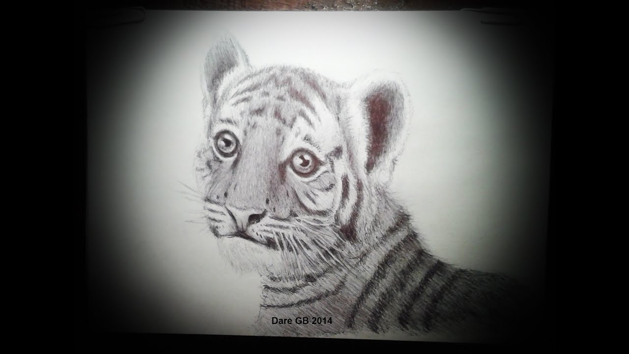 How to draw a realistic baby tiger como dibujar un tigre cachorro realista speed drawing