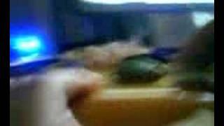 My Tortoise (die)
