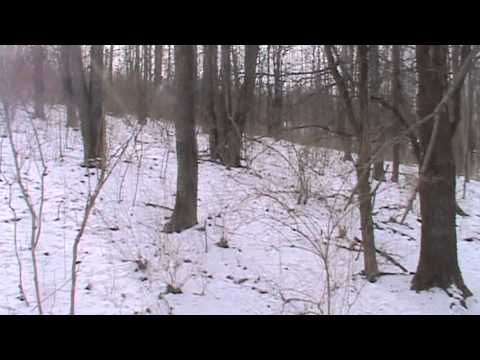 Rabbit Hunting With Beagles Buck & Thorn...Lance Bags A Limit Part 1