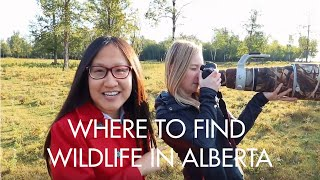 Where to Find Wildlife in Alberta | Alberta, Canada
