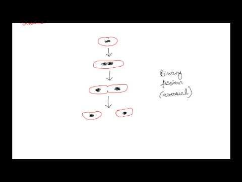 DC Leaving Cert Biology - Bacteria (Monera) I