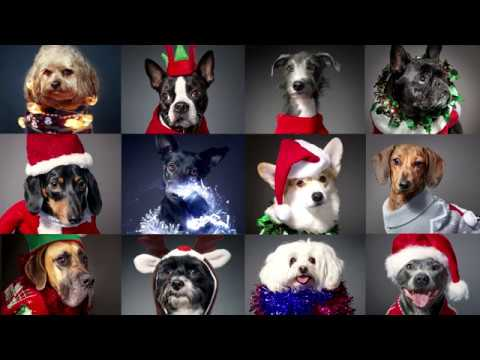 12 Dogs Of Christmas.12 Dogs Of Christmas Christmas Jumper Day