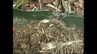 Test BAR Barrière anti rhizomes pour bambous
