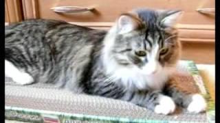 Счастье кота Матроса....новая когтеточка
