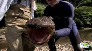 Up Close and Personal with a Giant Salamander