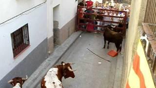 Vacas Biota 2010