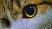 Bessere Makrofotos mit FOCUS STACKING - Praxisvideo TUTORIAL - YouTube