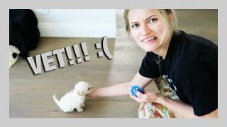 First puppy visit to the VET! :( | iJustine