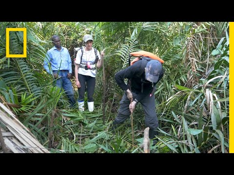 Peatlands Critical In Climate Change Fight   National Geographic