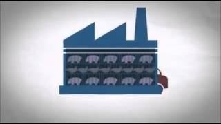 L'élevage Industriel.