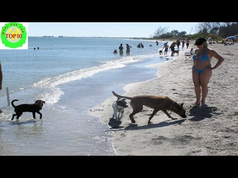 10 Most Spectacular Dog Friendly Beaches in America