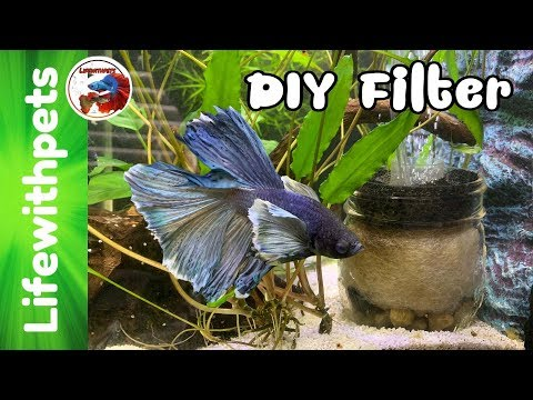 EASY DIY FILTER For A BETTA FISH TANK.