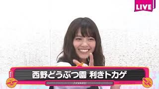 西野七瀬 乃木坂46.