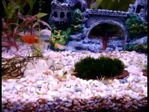 Pecera hanner acuario de agua dulce peces tropicales 200 for Peces agua dulce tropicales para acuario