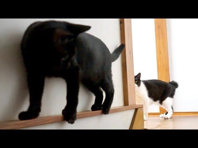 黒猫の方向転換