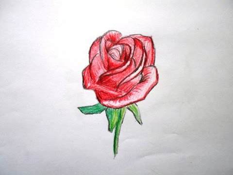 how to draw a simple red rose