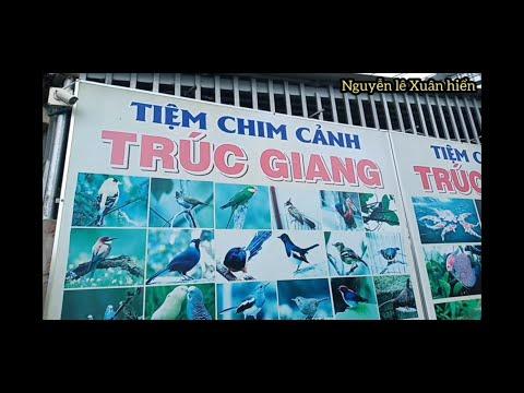 Thăm quan tiệm chim cảnh ( trúc Giang ) châu thành , bến tre - BEN TRE wharf store
