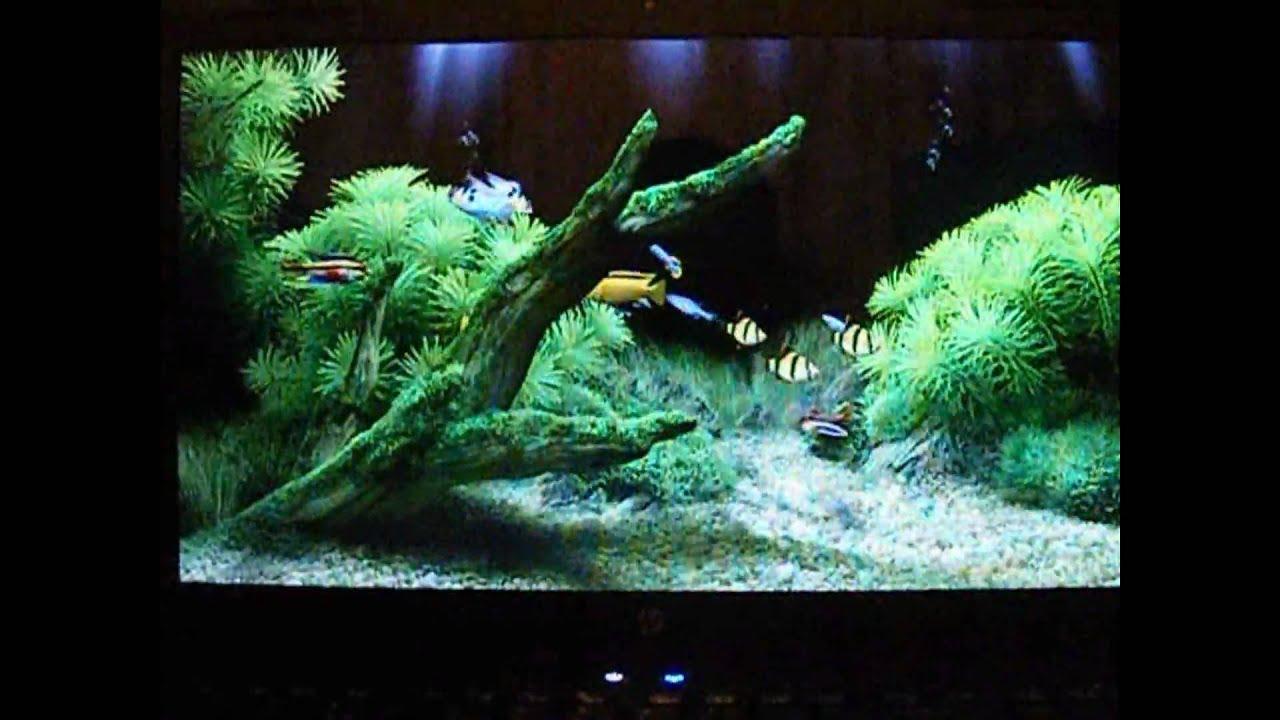 Dream aquarium hp g61 my screensaver youtube - Hp screensaver ...