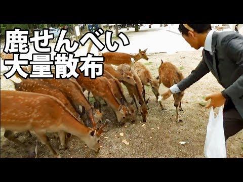 鹿せんべいに6000円課金する奈良公園の帝王