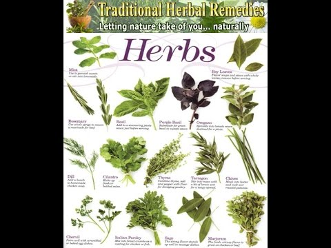 Medicinal Herbs in the Permaculture Food Forest