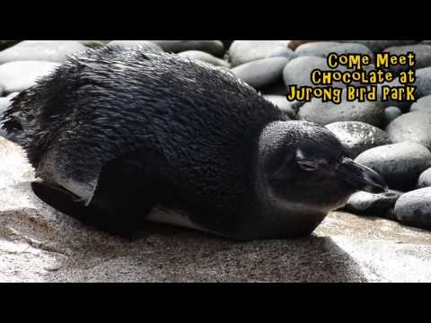 Interview With Chocolate The African Penguin: How Many Fish Can You Eat?