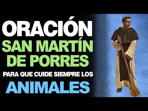 🙏 Oración a San Martín de Porres PARA LOS ANIMALES 🐶