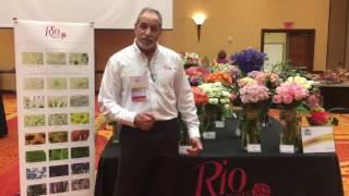 Raul Marrero - Rio Roses - Texas State 2017