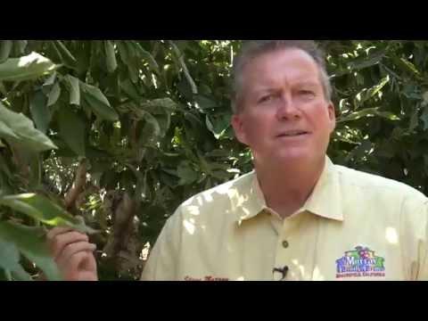 Steve Murray, farmer, Bakersfield, California