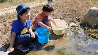 물고기 장구애비 물자라 잡아서 산속 연못에 채우기
