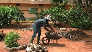 Organic farm in Benin sows example for Africa