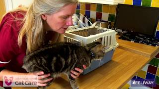 Placing a cat in a cat carrier