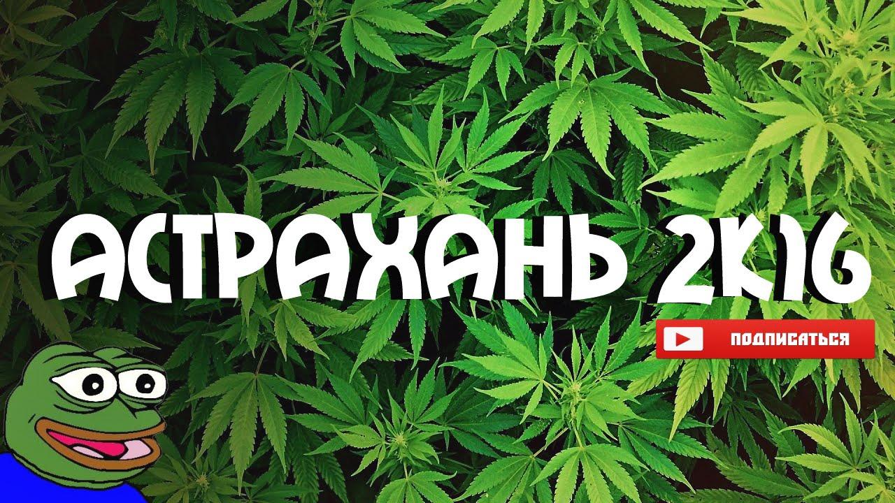Отдых в Астрахани | Поле конопли | Часть 1