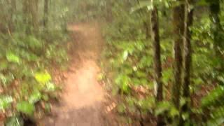 Jungles of Phi Phi Island